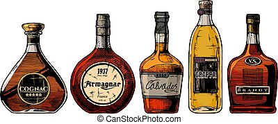 Types of Brandy. Vector hand drawn illustration set of different brandies. Cognac, armagnac, calvados, Grappa and brandy. Isolated on white background