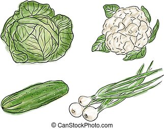 Types of fresh vegetables