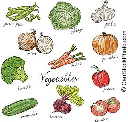 Types of fresh vegetables with description