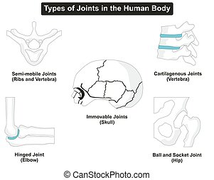 Types of Human Body Joints Anatomy for medical science...
