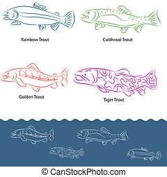 Types of Trout - An image of a types of trout.