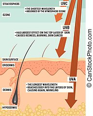 Types of UV radiation and their effect on human skin.
