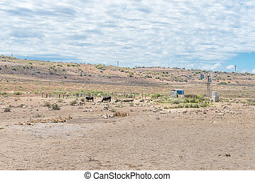 Typical arid Karoo farm scene