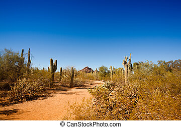 Typical Arizona desert landscape with cacti and clear blue sky
