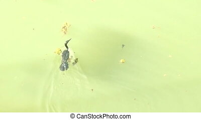 Typical birds of India in typical conditions 29. Cormorant...