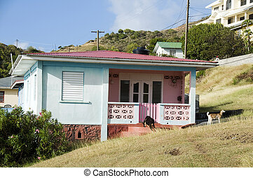 typical colorful caribbean style house with goats and farm animals in yard in bequia st. vincent and the grenadines islands