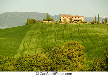 Typical farmhouse building in Tuscany in middle of vineyard ...