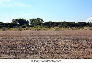 Typical Mediterranean vegetation with sand and shrubs called...