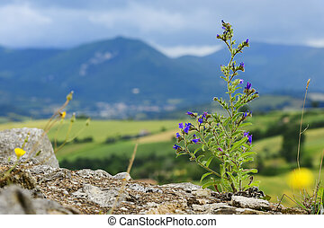 Typical plant and landscape in Marche