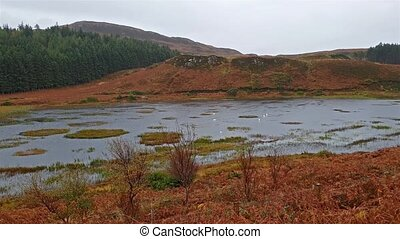 Typical scottish loch in autumn during the rain - uk