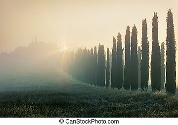 Typical tuscan landscape - Cypress alley in Tuscany, Italy.