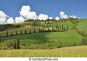 Typical Tuscan landscape  - Typical Tuscan landscape. Italy