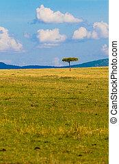 typisch, baum, savanne, landschaftsbild, afrikanisch