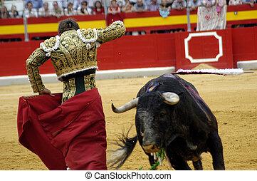 typowy, walka byków, w, hiszpania