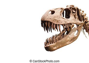 tyrannosaurus rex, kopf, weißes, freigestellt, hintergrund, mit, copyspace.