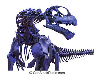 tyrannosaurus rex, skelett, weiß