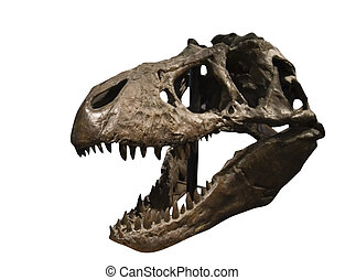 Tyrannosaurus Rex Skull at the T Rex Discovery center, in...