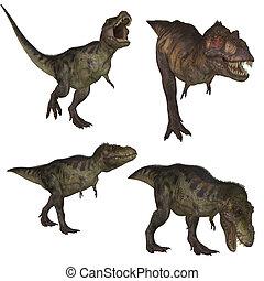 Tyrannosaurus Rex - Tyrannosaurus  lived in Northamerica