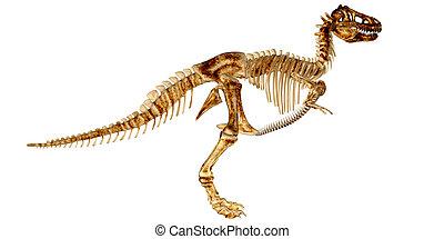 Tyrannosaurus Rex's Skeleton