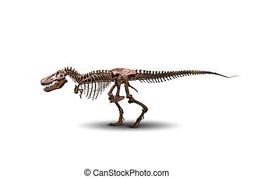 tyrannosaurus, skelett, freigestellt, auf, white.