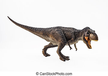 Tyrannosaurus T-rex ,dinosaur on white background .