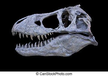 tyrannosaurus, vrijstaand, schedel