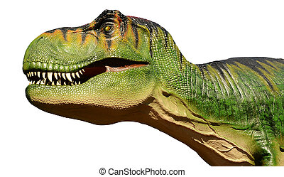 Tyranosaurus Rex Isolated - The head of a large model...