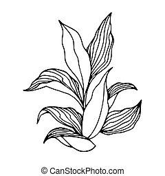 tytoń, rolniczy, krzak, liście, roślina