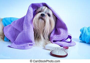 tzu, shih, secondo, lavaggio, cane
