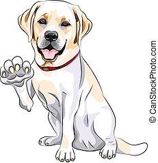 uśmiecha się, labrador, łapa, pies, radosny, wektor,...