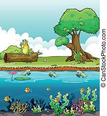 uśmiechanie się, rzeka, żaba