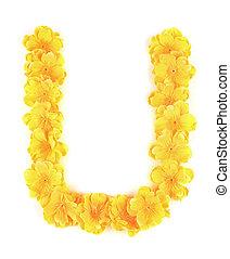 u, flor, alphabet., letra