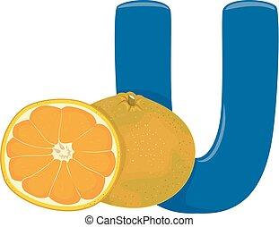 U for Ugli Illustration - Illustration of Fruits Alphabet, a...