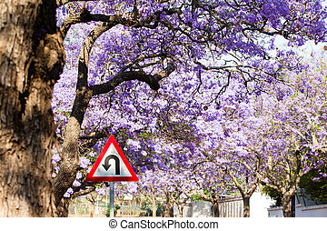 U-turn road sign against beautiful purple flowers of blossoming