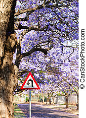 U-turn warning road sign between purple jacaranda trees