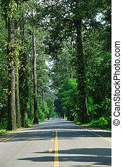 %u0E34big tree beside asphalt road