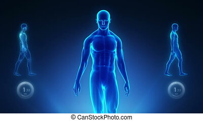 %u2013, pojęcie, kręgosłup, dobry, rentgenowski, postawa