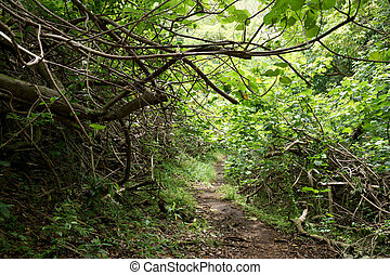 'ualaka'a, haut, piste, sentier forêt, descendant