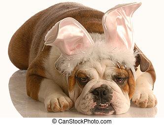 ubrany, wielkanoc, pies, królik