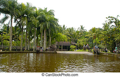 Outdoor pond and elephants at The Elephant Safari Park in Ubud,