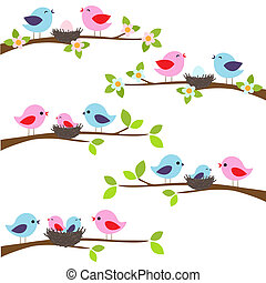 uccelli, famiglia