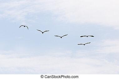 uccelli, in, il, cielo