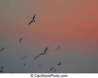 uccelli, paradiso