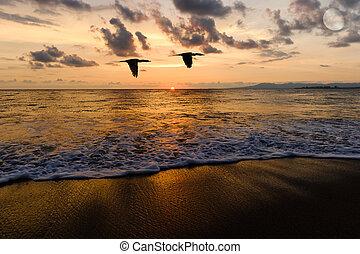 uccelli volanti, oceano, tramonto, silhouette