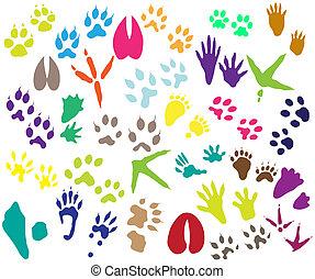 uccello, animale, collezione, traccia, segno, scia