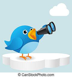 uccello blu, nuvola, ricerca