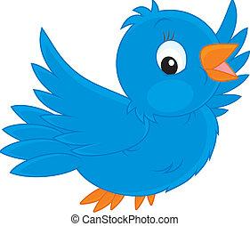 uccello blu