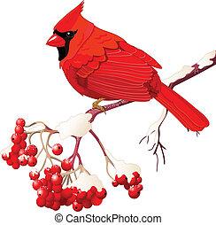 uccello, cardinale, rosso