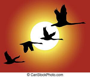 uccello, e, tramonto