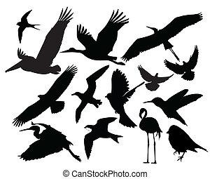 uccello, fauna